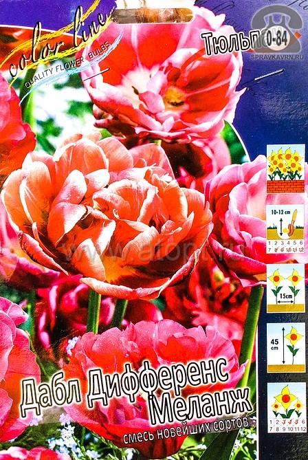 Посадочный материал цветов тюльпан Дабл Дифференс Меланж многолетник махровая луковица 10 шт. Нидерланды (Голландия)