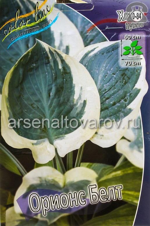 Посадочный материал цветов хоста Ориос Белт многолетник корневище 1 шт. Нидерланды (Голландия)