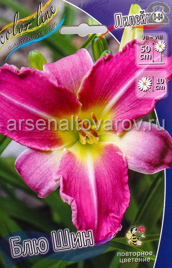 Посадочный материал цветов лилейник Блю Шин многолетник корневище 2 шт. Нидерланды (Голландия)