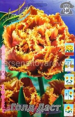 Клубнелуковичный цветок тюльпан Двойной Эффект Голд Даст