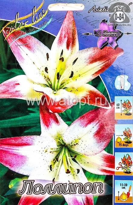 лилия азиатская Лоллипоп (в пакете 5 шт) цена за пакет луковичные (Голландия)