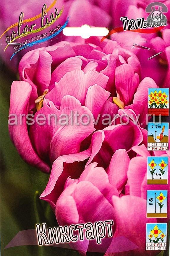 луковичные тюльпан махровый ранний Кикстарт (в пакете 10 шт) цена за пакет (Голландия)