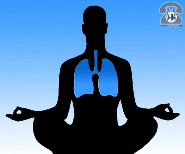 Упражнения лечебные мягкая растяжка при хронических заболеваниях органов дыхания для взрослых