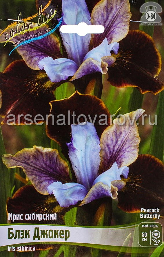 Посадочный материал цветов ирис (касатик) сибирский Блэк Джокер многолетник корневище 2 шт. Нидерланды (Голландия)