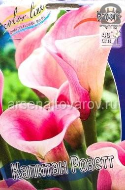 Посадочный материал цветов калла (белокрыльник) Капитан Розетт многолетник клубень 2 шт. Нидерланды (Голландия)