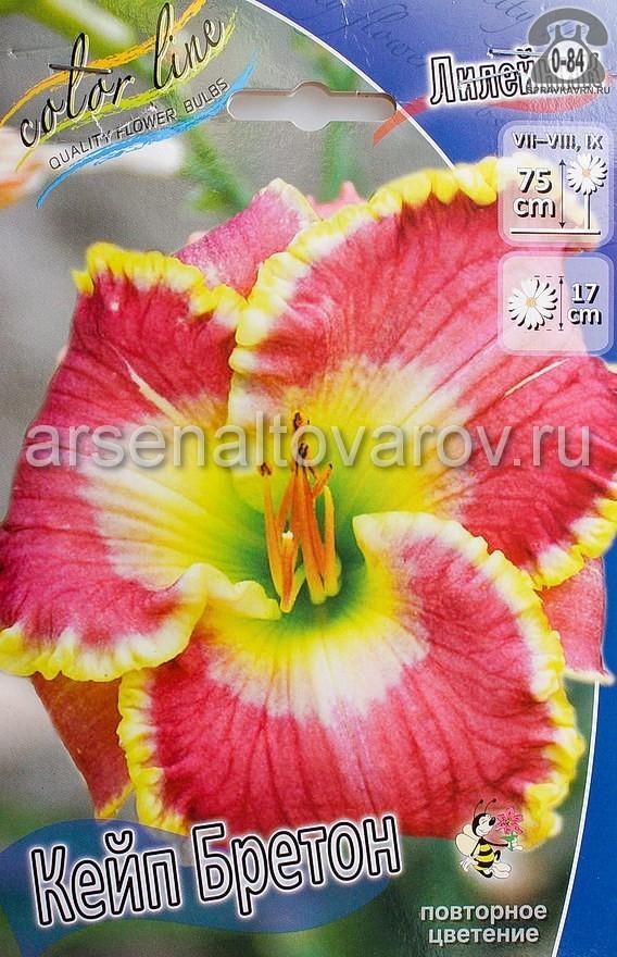 Посадочный материал цветов лилейник Кейп Бретон многолетник корневище 1 шт. Нидерланды (Голландия)
