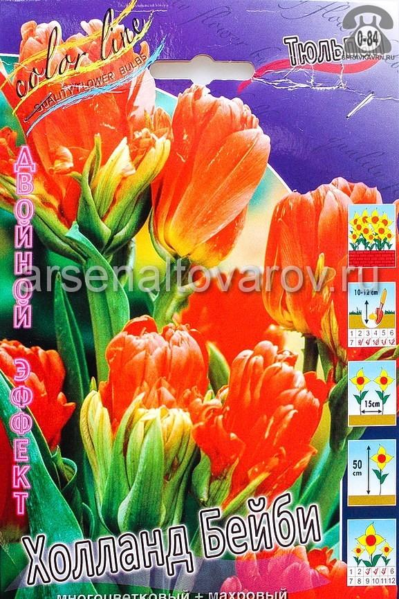 тюльпан двойной эффект Холланд Бейби (в пакете 10 шт) цена за пакет луковичные (Голландия)