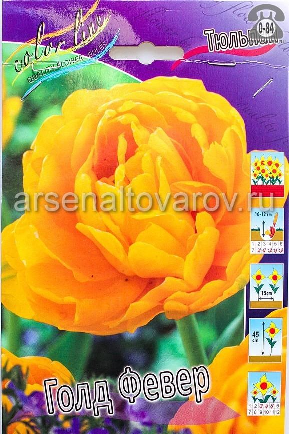 Посадочный материал цветов тюльпан Голд Февер многолетник махровая луковица 10 шт. Нидерланды (Голландия)