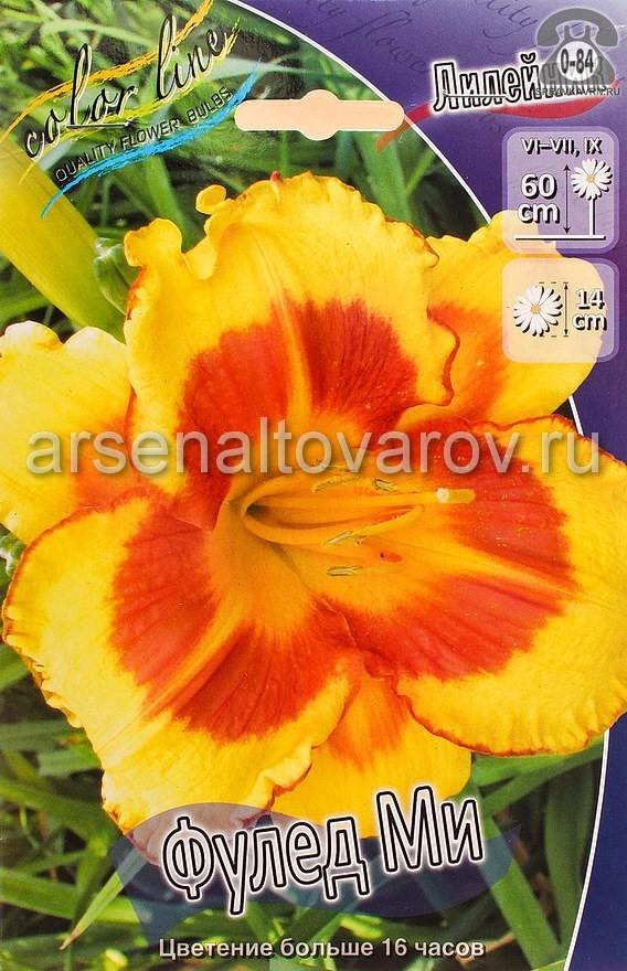 Посадочный материал цветов лилейник Фулед Ми многолетник корневище 1 шт. Нидерланды (Голландия)