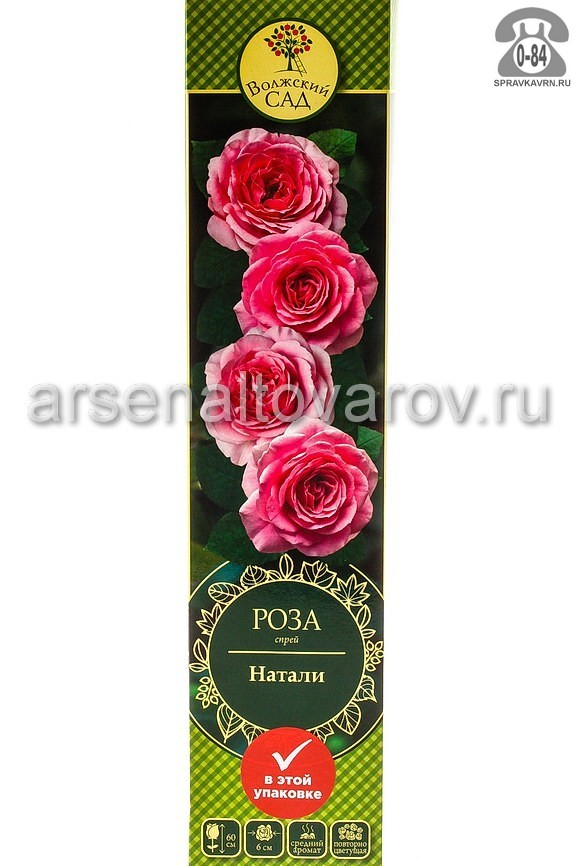 саженцы роза спрей Натали розовая (Россия)