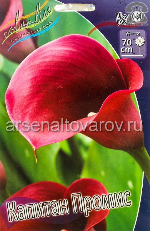 Посадочный материал цветов калла (белокрыльник) Капитан Промис многолетник клубень 2 шт. Нидерланды (Голландия)