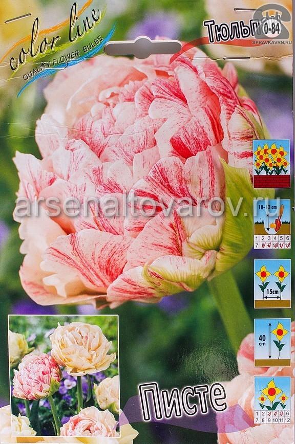 Посадочный материал цветов тюльпан Писте многолетник махровая луковица 10 шт. Нидерланды (Голландия)